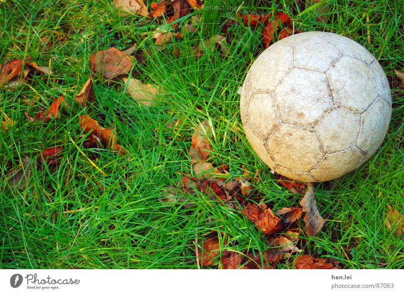 kick it... Leisure and hobbies Foot ball Grass Leaf Meadow Round Brown Gray Green Lawn Colour photo Exterior shot Deserted Copy Space left Day Sunlight