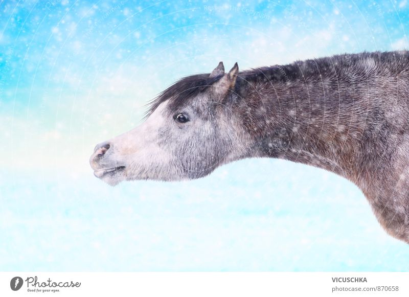 Horse in winter snowfall Lifestyle Winter Nature Animal Pet Farm animal Wild animal 1 Joy Happy Happiness Contentment grey black white one equine storm