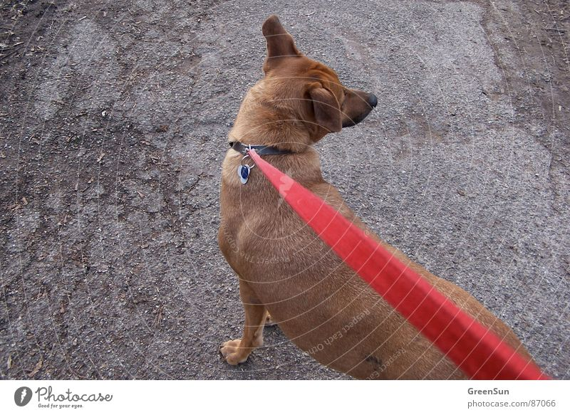 The red line Animal Brown Asphalt Gray Heavy Crack & Rip & Tear Red Long Exterior shot Mammal Calm Nature Rope Line