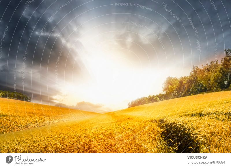 Sky Nature Blue Summer Sun Calm Yellow Meadow Autumn Background picture Horizon Leisure and hobbies Field Gold Planning Hill