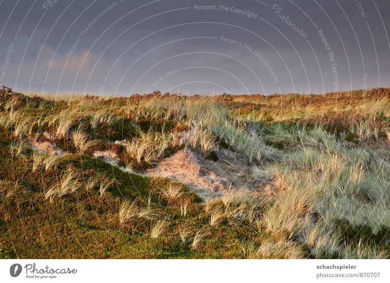 Sky Nature Blue Green Landscape Moody Brown Dune North Sea Marram grass