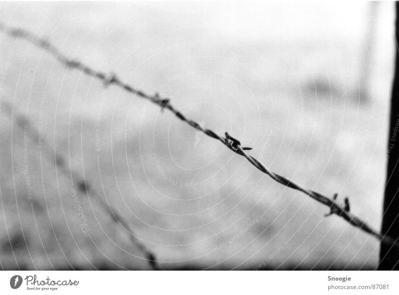 barbed wire of death stud farm Concentration camp Poland Tourist Attraction Monument Steel Sadness Aggression Creepy Gray Black White Emotions Fear Horror