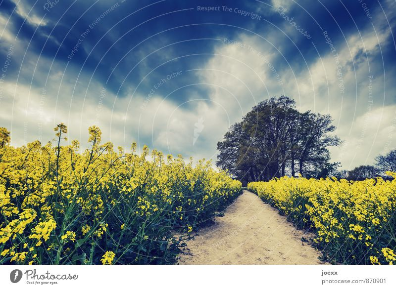 up and away Nature Landscape Sky Clouds Summer Beautiful weather Tree Agricultural crop Field Lanes & trails Idyll Calm Colour photo Subdued colour