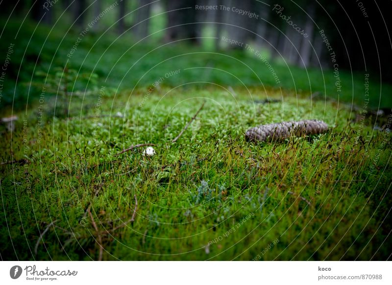 In an enchanted place (IV) Environment Nature Landscape Plant Earth Spring Summer Autumn Tree Grass Moss Cone Mushroom Forest Growth Dark Authentic Simple