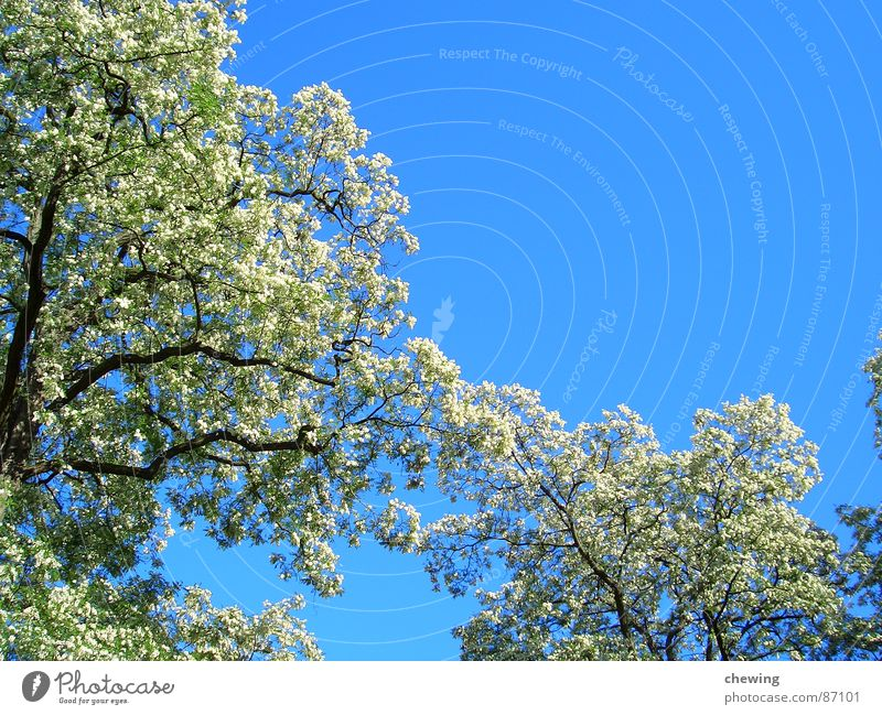 Sky Green Summer Yellow Colour Blossom Spring Freedom Brown Asia Clarity Branch Blossoming Seasons Twig Paradise