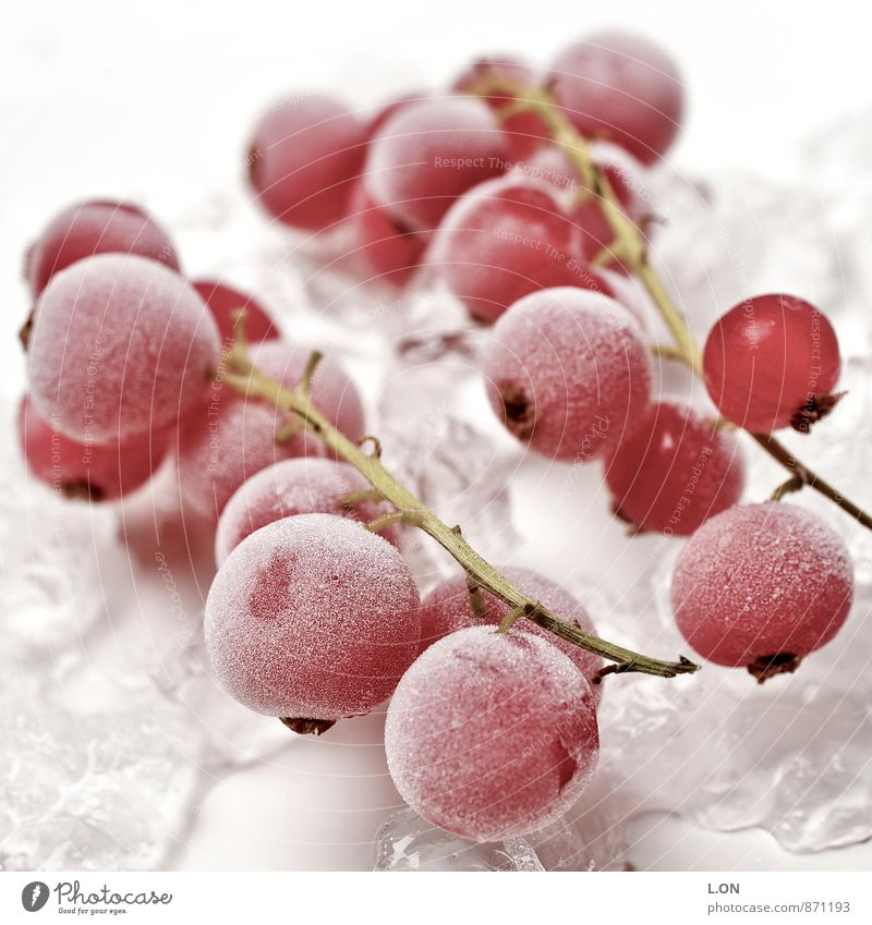 Ice coldly softened Food Fruit Redcurrant Redcurrant bush Ice cube Frozen Nutrition Organic produce Vegetarian diet Plant Cold Colour photo Studio shot Deserted