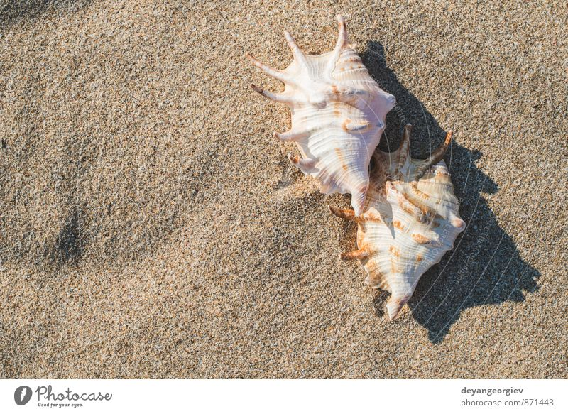 Shells on the beach Exotic Relaxation Vacation & Travel Tourism Summer Sun Beach Ocean Waves Nature Landscape Sand Sky Coast Blue White Idyll Mussel shell