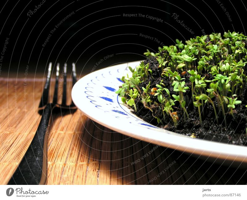 Green Nutrition Life Healthy Herbs and spices Vegetable To enjoy Plate Ecological Meal Vitamin Lunch Verdant Gourmet Vegetarian diet Cress