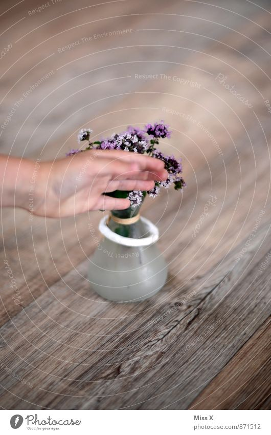 photobomb Food Herbs and spices Nutrition Italian Food Decoration Hand Fingers Touch Blossoming Fragrance Violet Thyme Colour photo Multicoloured Interior shot