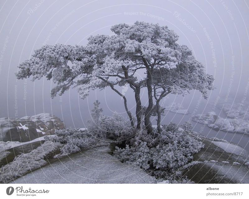 snow-covered tree Tree Winter Snow Mountain Water Ice Nature Americas Sweden