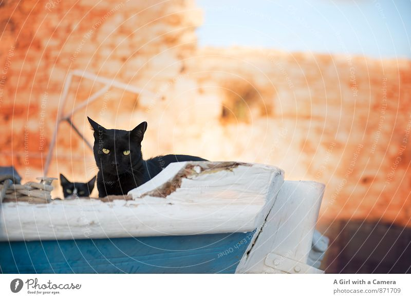 dry sailing Animal Pet Cat 2 Baby animal Free Black cat Family & Relations Protection House (Residential Structure) Observe Curiosity Contempt Colour photo