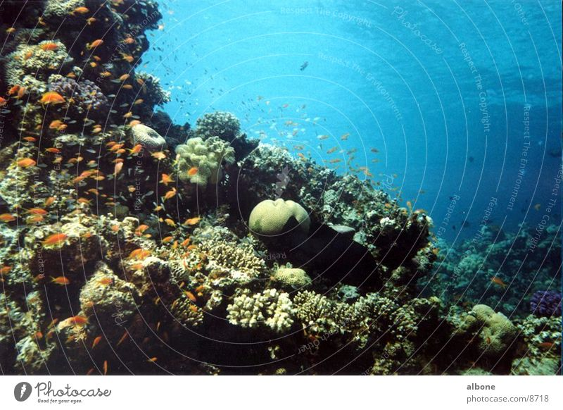 corals Ocean Coral Fish Water