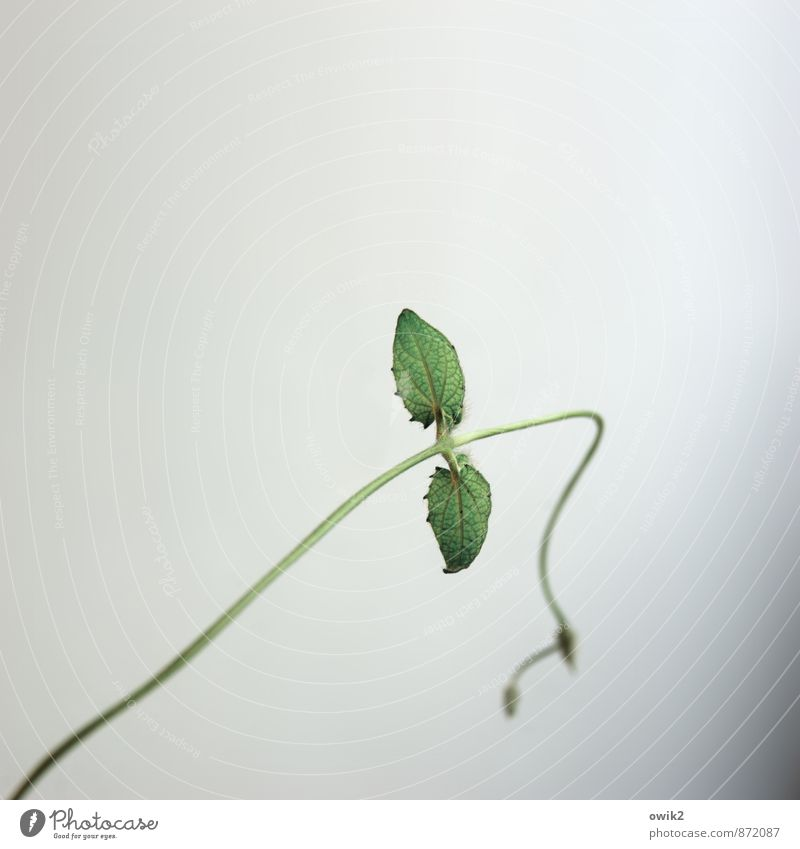 Plant Green Loneliness Leaf Life Sadness Movement Small Growth Elegant Individual Joie de vivre (Vitality) Change Thin Brave Hang