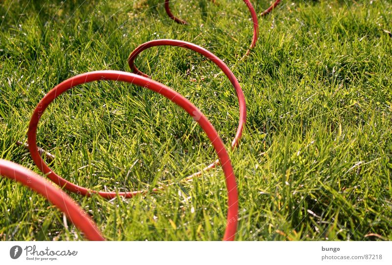 Plant Summer Meadow Jump Grass Spring Garden Line Electricity Communicate Cable Floor covering Connection Curve Blade of grass Connect