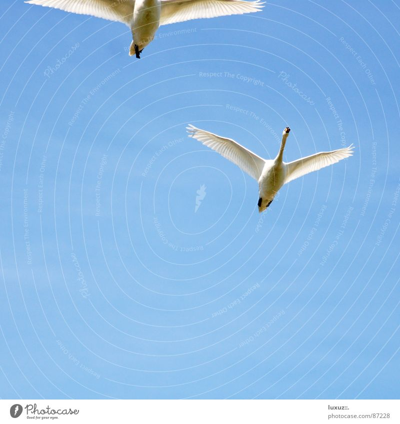 Sky White Blue Vacation & Travel Love Animal 2 Together Bird Pair of animals Tall Aviation In pairs Feather Wing Hunting
