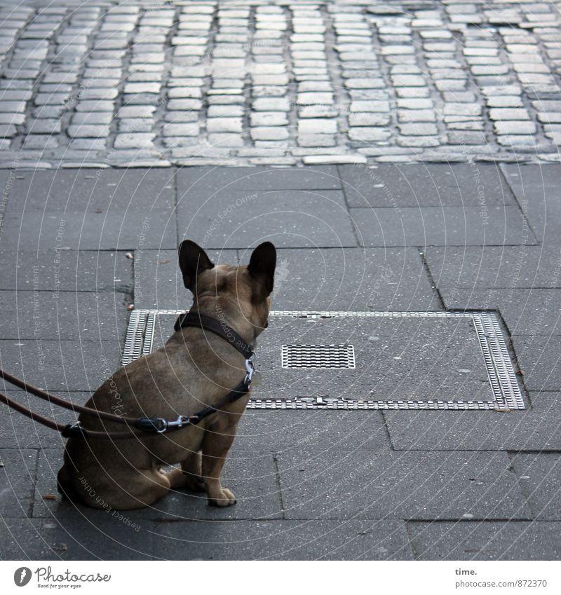 Dog City Animal Street Lanes & trails Small Transport Sit Wait Observe Safety Sidewalk Longing Serene Watchfulness Traffic infrastructure