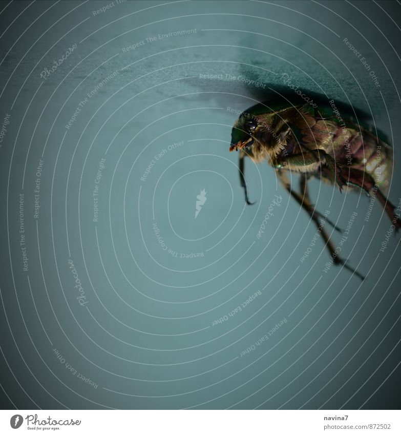 beetle body Animal Wild animal Dead animal Beetle 1 Crawl Lie Broken Above Gloomy Blue Green Belief Grief Death Exhaustion Fear of heights Fear of flying Stress