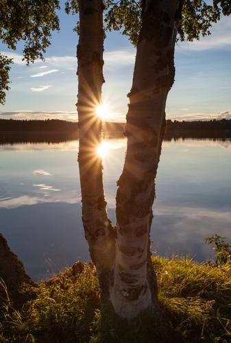 Sky Nature Vacation & Travel Water Summer Sun Tree Relaxation Landscape Calm Far-off places Forest Warmth Freedom Lake Glittering