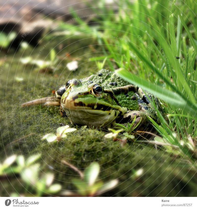 Nature Green Animal Grass Garden Lake Park Wait Environment Ground Floor covering Observe Frog Pond Biology Organic produce