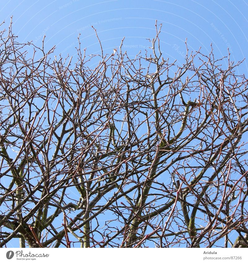 two on blue Branchage Tree Cut Spring Aviation Twig Nature Blue Sky