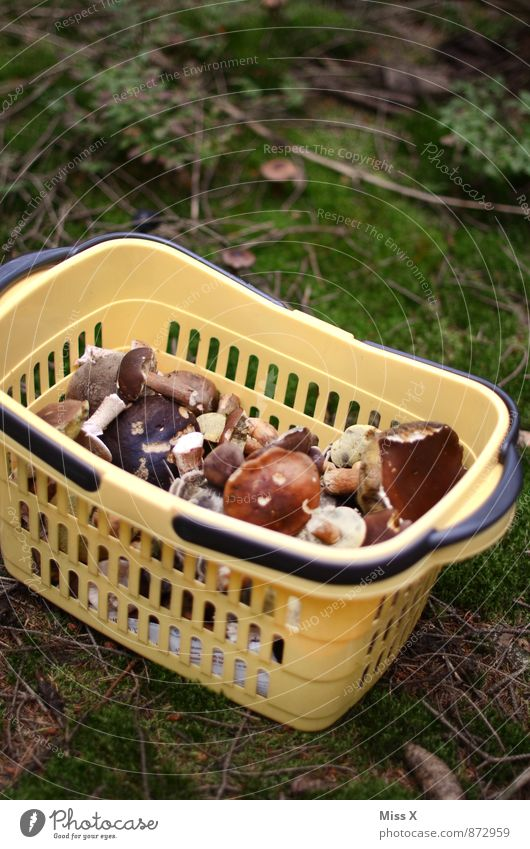 Nature Forest Environment Healthy Eating Autumn Food Leisure and hobbies Dirty Fresh Nutrition Search Delicious Moss Mushroom Collection Basket
