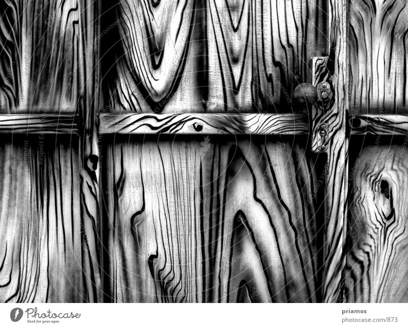 zebra Closed Photographic technology Black & white photo Door Gate