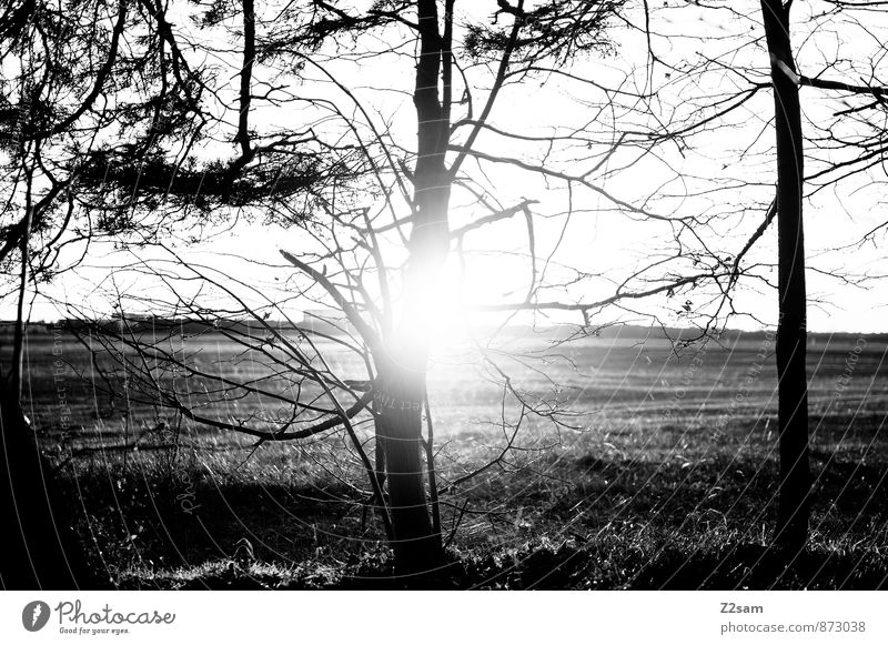 Nature Plant Tree Relaxation Loneliness Landscape Calm Dark Forest Environment Life Autumn Natural Field Idyll Gloomy