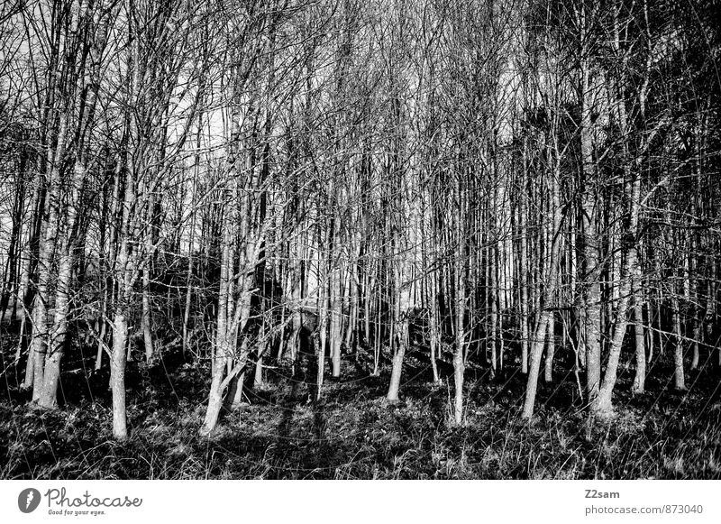 Nature Tree Loneliness Relaxation Landscape Dark Forest Environment Moody Arrangement Gloomy Idyll Bushes Energy Esthetic Beautiful weather