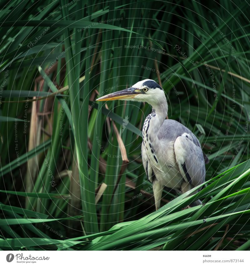 Nature Green Animal Environment Natural Bird Wild Wild animal Authentic Stand Wait Feather Esthetic Fantastic Mysterious Lakeside