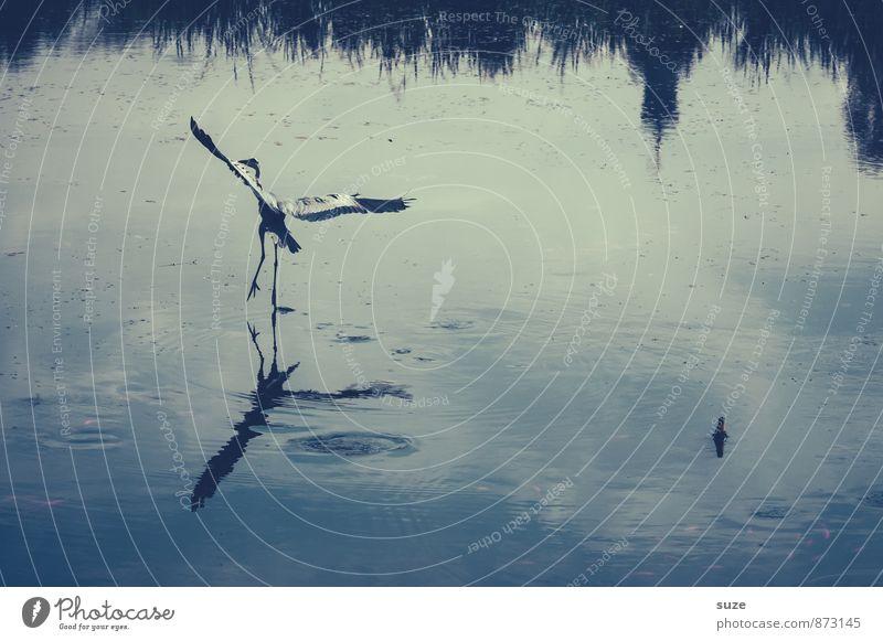 Flying, you're a raäädi tu goooh. Elegant Environment Nature Landscape Animal Water Pond Lake Wild animal Bird Wing Movement Fantastic Natural Blue Heron