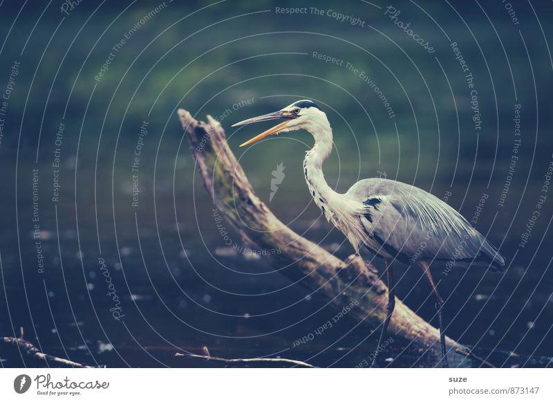 Nature Blue Water Landscape Animal Environment Gray Lake Bird Wild Elegant Wild animal Stand Wait Feather Esthetic