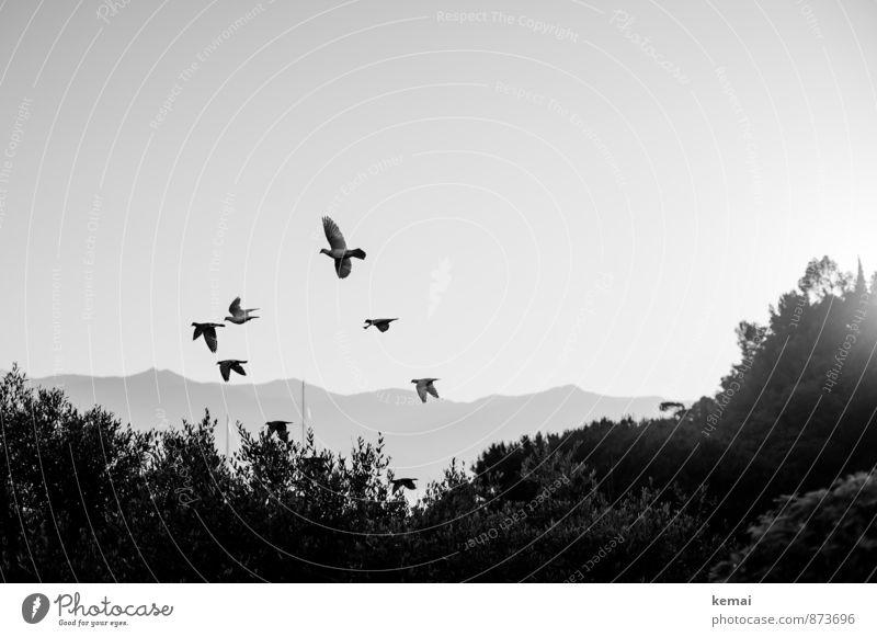 One fine morning Plant Bushes Hill Animal Wild animal Bird Pigeon Flock Flying Flock of birds Black & white photo Exterior shot Deserted Copy Space right