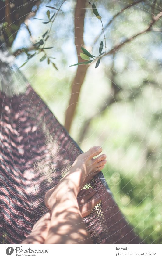A good place Lifestyle Vacation & Travel Camping Summer Summer vacation Sun Sunbathing Feet Toes 1 Human being Leaf Foliage plant Olive grove Olive tree Hammock