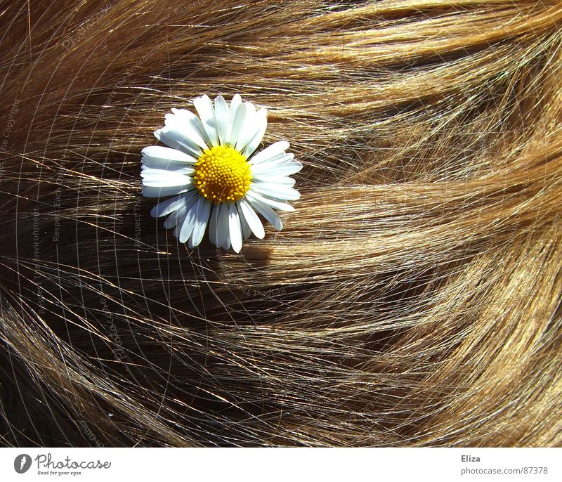 Blond hair with a daisy Daisy Sun Summer Blonde decoration hairstyle Wedding flowers flowery Hippie romantic bleed Hair and hairstyles frisky Summery spring