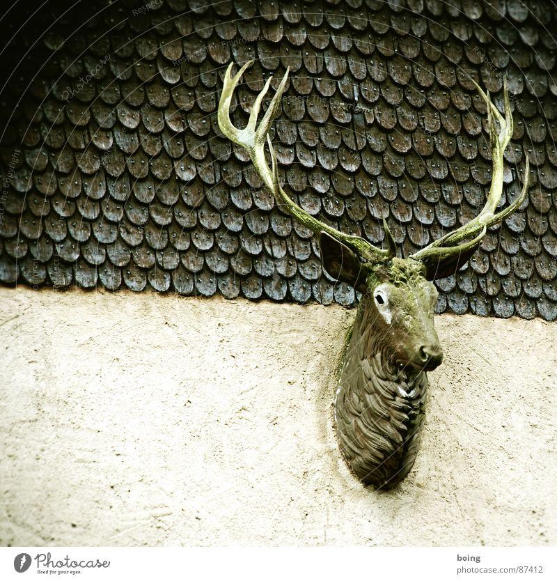 Rudi: hello my deer Rutting season Palais Kesselstadt Hunting Royal stag Deerstalking Antlers Trophy Buck Hunter Roe deer Wild animal Vension Wild child