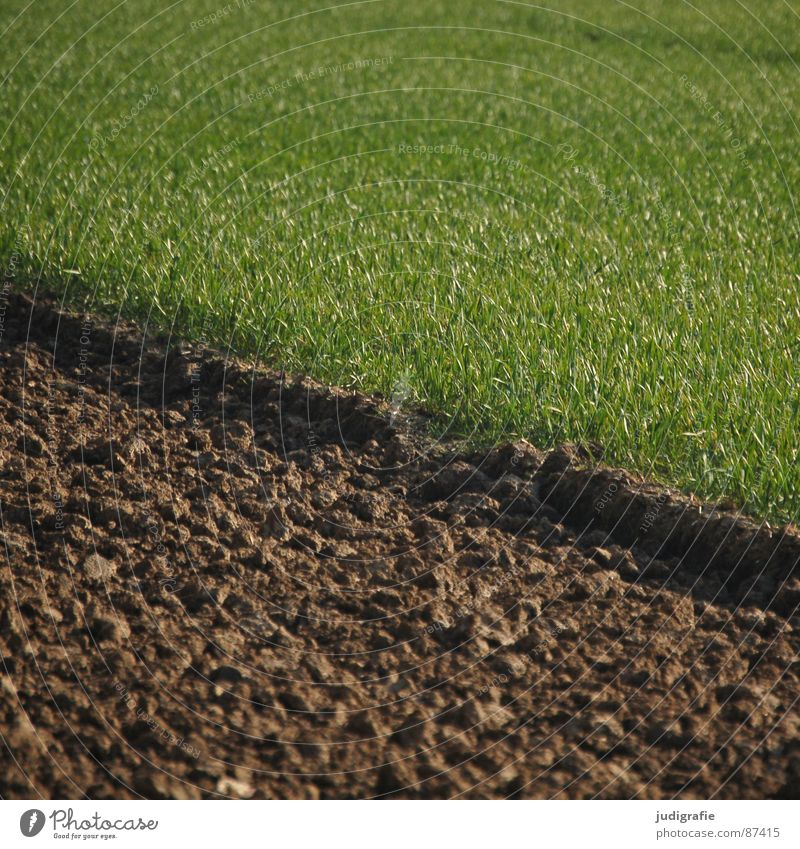 Green Meadow Spring Line Brown Earth Field Growth Floor covering Agriculture Contract Plow Extend
