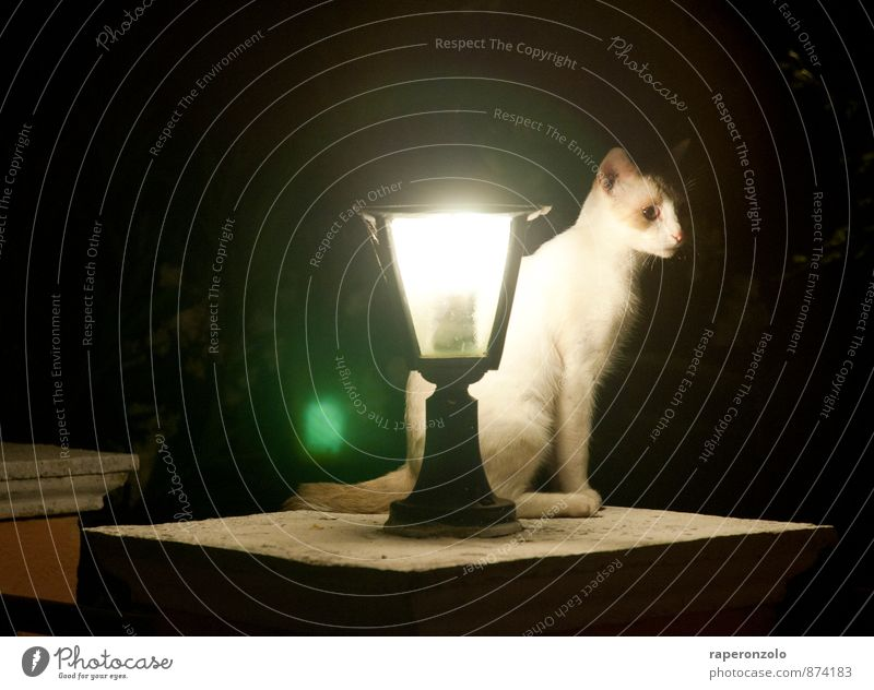 lonesome tonight Animal Pet Cat 1 Observe Illuminate Dark Black White Loneliness squeeze Wait Watchfulness Guard Nerviness Street lighting
