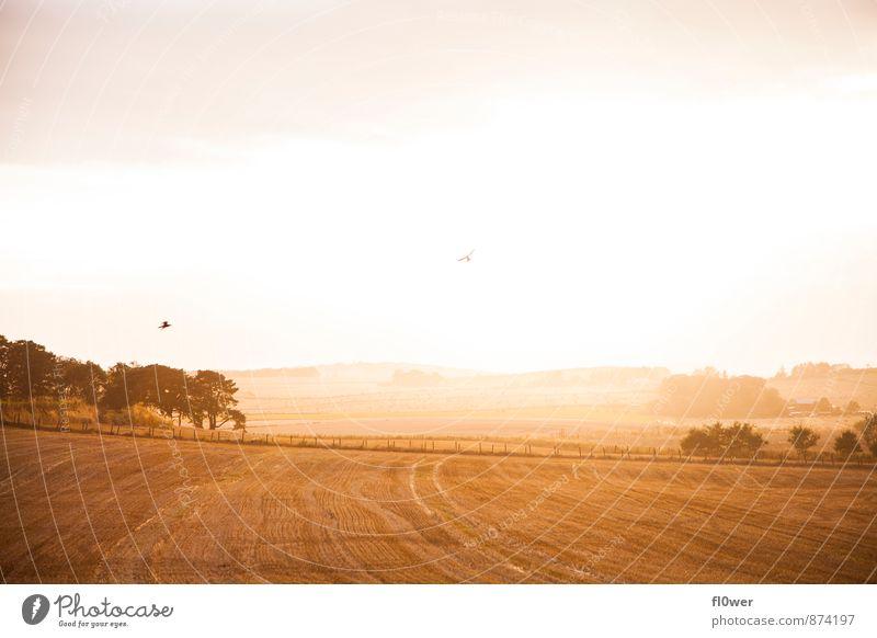 Sky Nature Beautiful Tree Landscape Animal Warmth Autumn Bird Field Fly Beautiful weather Infinity Fence Straw