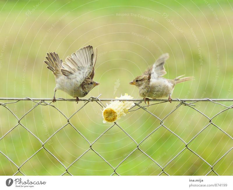 Green Animal Eating Brown Bird Wild Power Wild animal Pair of animals Threat Cute Argument War Aggression Brash Fight