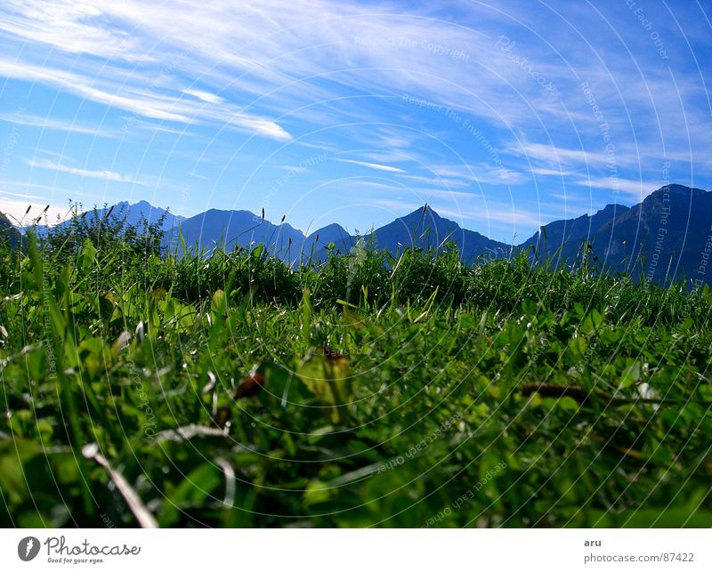 In the grass Grass Vacation & Travel Meadow Green Mountain Looking Sky Alps