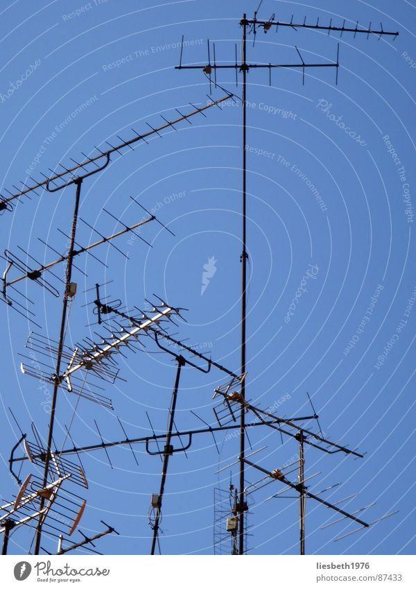Sky Blue Summer Arm Cool (slang) Technology TV set Television Branch Antenna Welcome Spark Army Transmit Branched Finch