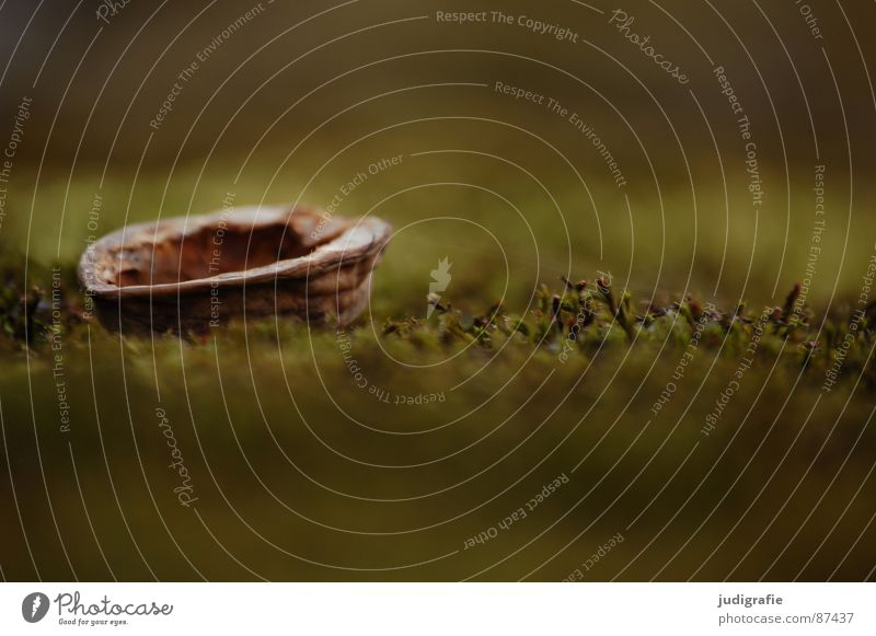 Nature Green Watercraft Environment Lie Bowl Nut Walnut Nutshell