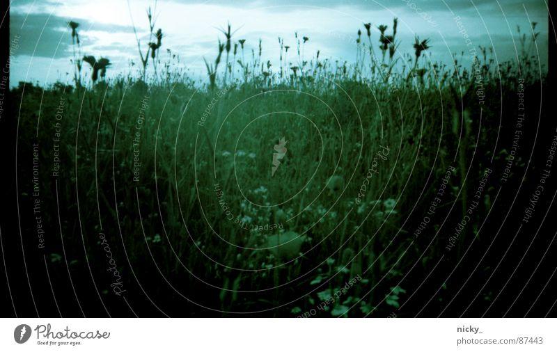 nostalgic kittykat view Meadow Negative Green Grass Blade of grass Edge Black Beige Nostalgia Autumn Still Life Pasture Scan Sky Landscape