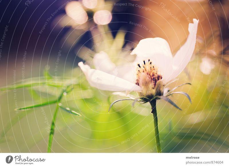 bokeh Plant Summer Beautiful weather Flower Grass Blossom Anemone Grass blossom Stamp Garden Blur light reflexes Blossoming Discover Glittering Brown Gold Green