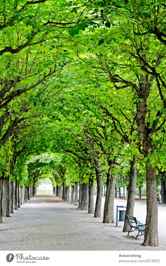 Nature Old Plant Green Summer Tree Relaxation Leaf Black Street Lanes & trails Gray Garden Art Park Decoration
