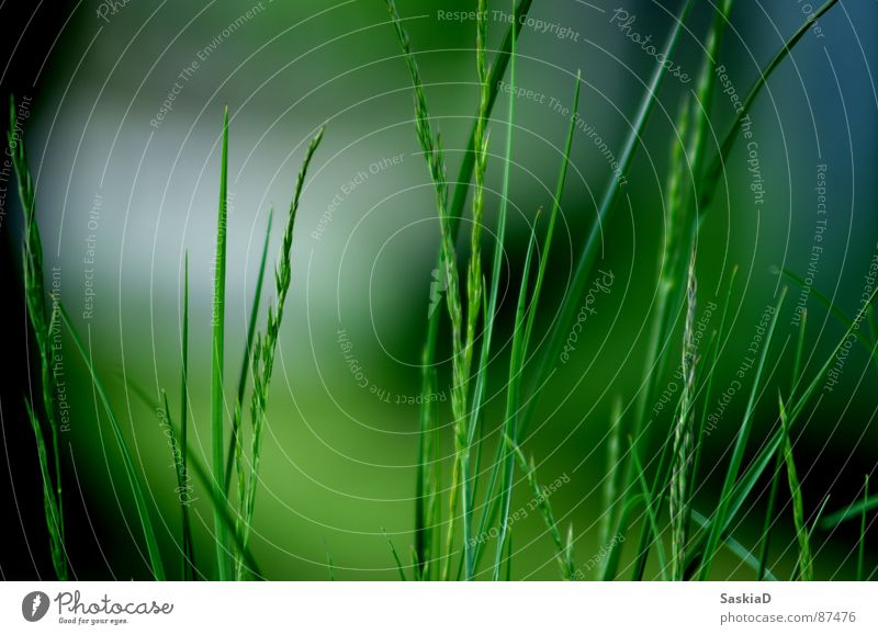 the scent of nature Green Summer grass Nature Garden stalk of grass Floor covering Fragrance Macro (Extreme close-up)