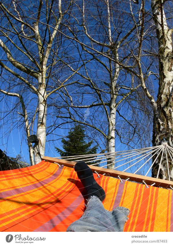 garden holidays Summer Hammock Spring Physics Hang Relaxation Birch tree Stockings Stripe Checkmark Tree trunk To enjoy Denim Sunbathing Droop Jeans