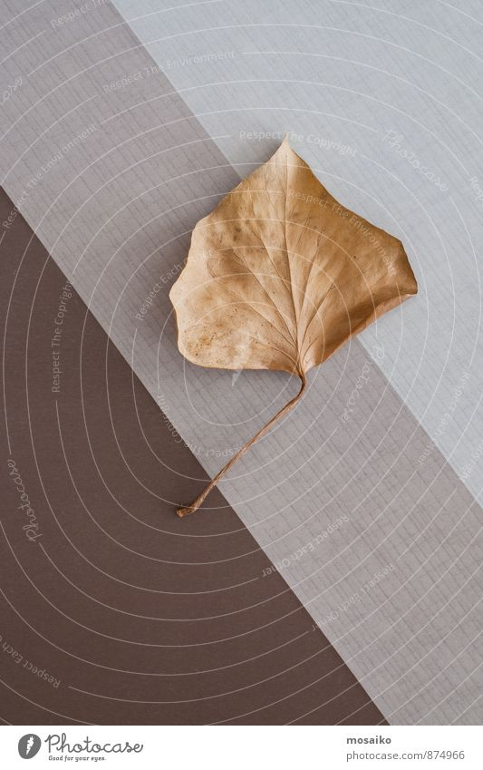 autumn leaf Life Leisure and hobbies Autumn leaves Thanksgiving Environment Nature Plant Tree Leaf Old Brown Yellow Gray Esthetic Elegant End Graphic Geometry