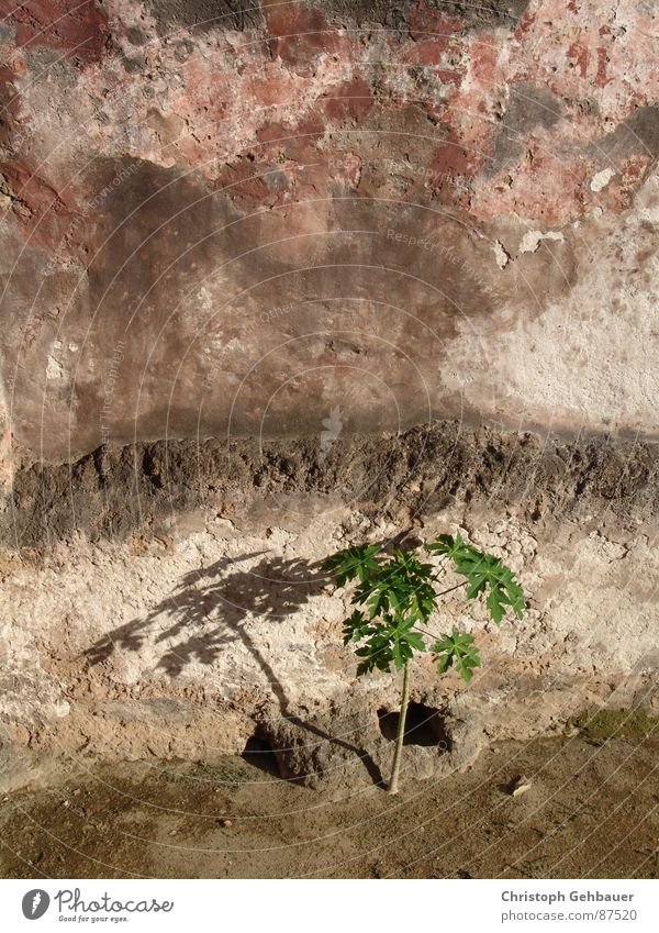 The plant and the wall Sapling Seedlings Plant Wall (barrier) Pattern Loneliness Remote Wild plant Natural phenomenon Botany Doomed young tree City wall Newborn