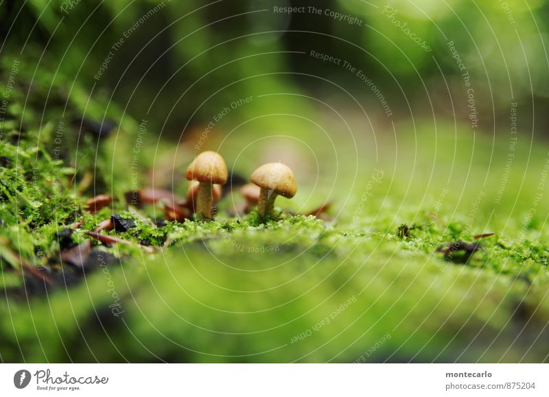 in the depths of the forest Environment Nature Earth Autumn Plant Bushes Moss Foliage plant Wild plant Mushroom Woodground Discover Hiking Thin Authentic Simple